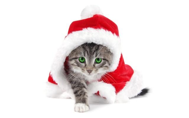 Gatito co disfraz de Santa Claus