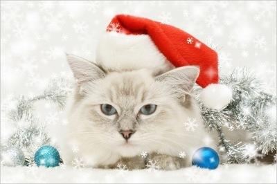 Wallpaper - Gato con sombrero de santa claus - Fondo de pantalla