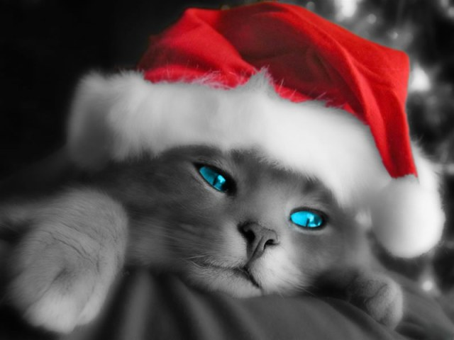 Fondo de pantalla gato navidad