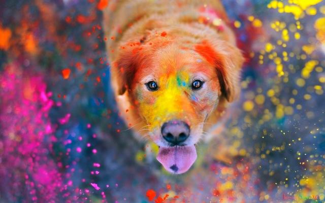 Fondo de pantalla: perro con pintura de colores | Wallpaper