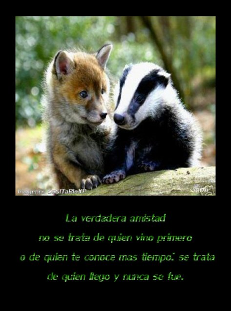 quotes, Zorrito, zorrillo, amistad, La verdadera amistad